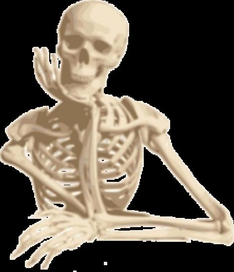 3月~7月 第1日曜日 10:00~13:00 全5回 機能解剖学をもう一度学び直したい人向けの『ムーブメント解剖学』講座※単発参加可能