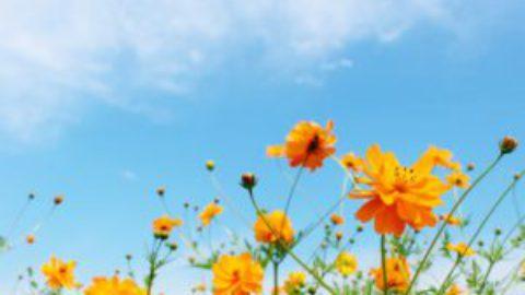 季節の変わり目による体調不良の予防をしませんか?
